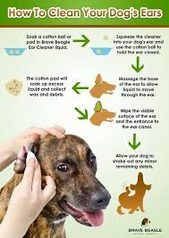 dog ear cleaner ear cleaning
