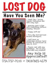 how to make lost dog flyers lost flyers omfar mcpgroup co
