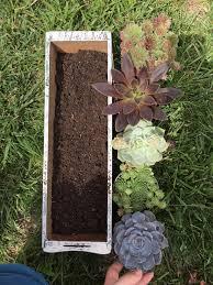 planting a diy succulent garden window box succulent garden
