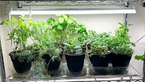successful indoor herb garden