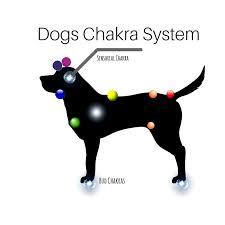 Animal Chakra Chart Working With Animal Chakras Humanity Healing Network