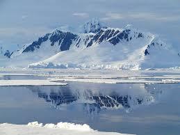 emperor penguin habitat. Brilliant Habitat Throughout Emperor Penguin Habitat