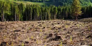 short essay on deforestation words deforestation