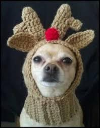 Crochet Dog Hat Pattern Custom Crochet Dog Hat Pattern Ideas Best Collection I Love To Be Warm