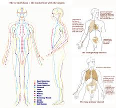 hand reflexology 12 meridians & the connection with the organs Meridian Lines Body Map hand reflexology 12 meridians & the connection with the organs meridian lines body map