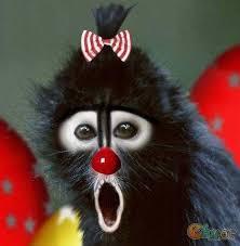 """Résultat de recherche d'images pour """"droles de singes"""""""