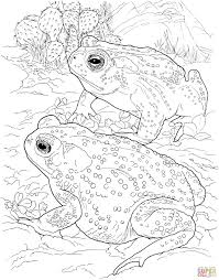 Remarkable Desert Animals Coloring Pages With At Animal 7 Futuramame