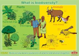 essay on ecosystem ecosystem essay scribd