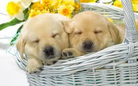 cute baby puppies sleeping. Brilliant Puppies Original Resolution For Cute Baby Puppies Sleeping P