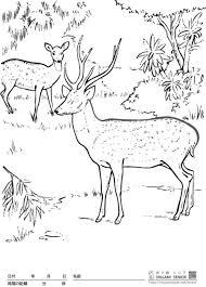 大人の塗り絵 鹿 無料プリント高齢者の脳トレレク Origamiシニア