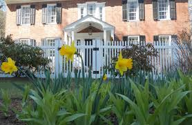 how does your garden grow by megan alexander daffodils emerge in the spring at country house bed and breakfast