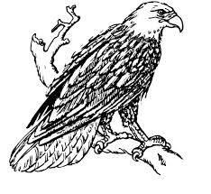 Small Picture 51 best Eagle Coloring Pages images on Pinterest Eagle