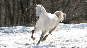 76 Horse Desktop Backgrounds Free On Wallpapersafari