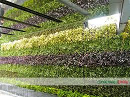 vertical garden indoor outdoor plants