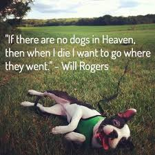 Dog Death Quotes