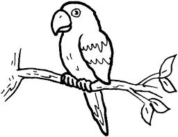 Small Picture Little Parrot Coloring Page Download Print Online Coloring