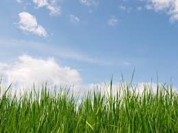 grass and sky backgrounds. Published February 11, 2015 At 1024 × 768 In Grass And Sky Backgrounds K