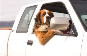 dogs car anxiety and travel sickness