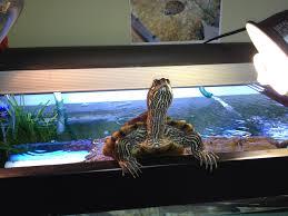 Turtle Tank Decor Aquarium Alexpleszcom The Blog
