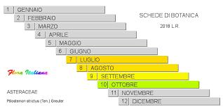 Ptilostemon strictus [Cardo stretto] - Flora Italiana