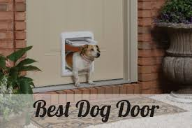 10 Best Dog Door Reviews Of 2018 - Shopping Hub