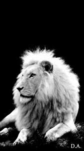 white lion iphone wallpaper. Plain Iphone White Lion And White Lion Iphone Wallpaper O