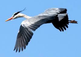 oiseau -Ajonc - 7 octobre trouvé par Martine - Page 2 Images?q=tbn:ANd9GcTXRLXdbPolDZQkzoN_sLB8aDZ5suxBHIHimfgxgSFh4z6nJbTj