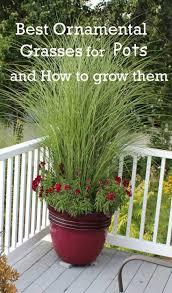 Tall Decorative Grass 17 Best Ideas About Ornamental Grass Landscape On Pinterest