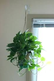 hanging plant indoor how to hang plants homely idea indoor hanging plants  interesting ideas indoors traditional