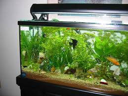 Labyrinth Fish Tank Aquarium Designs To Suit Your Home Ideas 4 Homes