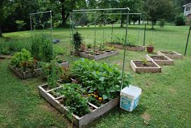 small backyard vegetable garden ideas in square wooden containers over green grass yard surrounding green lush vegetation and house with white wall