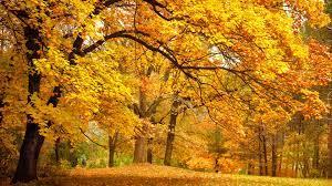 公园的树木,叶子,金色黄色的秋天风景桌面壁纸-风景壁纸-壁纸下载-彼岸桌面