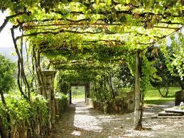 Terrace and Garden: Outdoor Grape Arbor Park Designs - Grape Arbor Garden