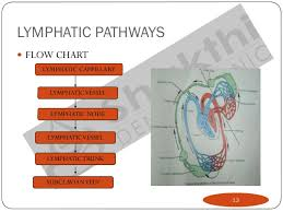 Lymph Flow Chart Lymphatic Drainage Of Head Neck