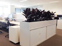office planter boxes. sansevieria laurentii displayed in white cabinet planter boxes coloured office