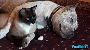 dog and cat love each other. Delighful Other And Dog Cat Love Each Other T
