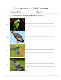 Environmental Science (EVS) : Birds Worksheet (Class II)