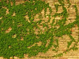 grass field aerial. Free Images : Tree, Grass, Field, Lawn, Wall, Suburb, Bush, Green, Jungle, Soil, Agriculture, Brick, Terrain, Map, Plain, Vegetation, Plantation, Ecosystem, Grass Field Aerial #