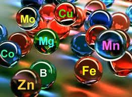 Химический состав клетки контрольная работа по биологии класса