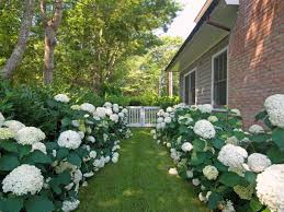 how to plant white garden perennials that bloom all summer gardens small flowers names green and