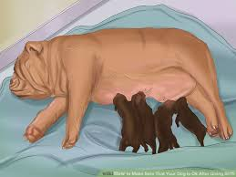 image led make sure that your dog is ok after giving birth step 3