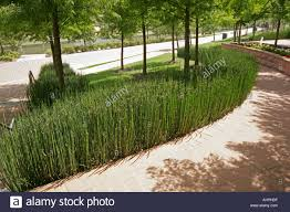 The Woodlands Houston Texas USA Bamboo used around a flower bed