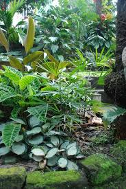Small Picture Waterfall And Pond In Front Yard Garden Florida Tropical Gardenl