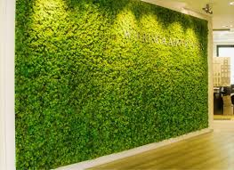 green office. large green moss wall in companies main reception office g