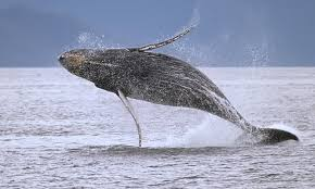 a picture of a whale. Beautiful Picture On A Picture Of Whale E