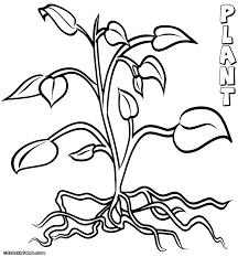 Small Picture Rainforest Plants Coloring Pages Coloring Coloring Pages