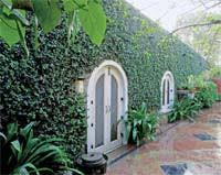 Jeepers Creepers  Home  India Today 26012009Wall Climbing Plants India