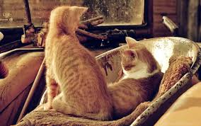 brown rug couple kittens lying wallpaper background best stock photos