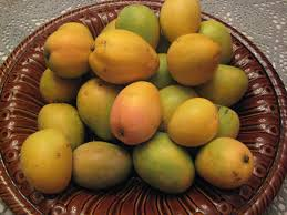 Fresh Avocado Fruit Growing On A Tree Jamaican Or Caribbean Jamaican Fruit Trees
