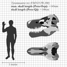 carcharodontosaurus size tyrannosaurus rex vs carcharodontosaurus animalia enthusiasts
